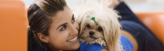 San Francisco Events - Golden Gate Kennel Club Dog Show - January 28-29