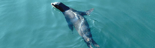 San Francisco Events - 27th Anniversary of the Sea Lions' Arrival @ Pier 39