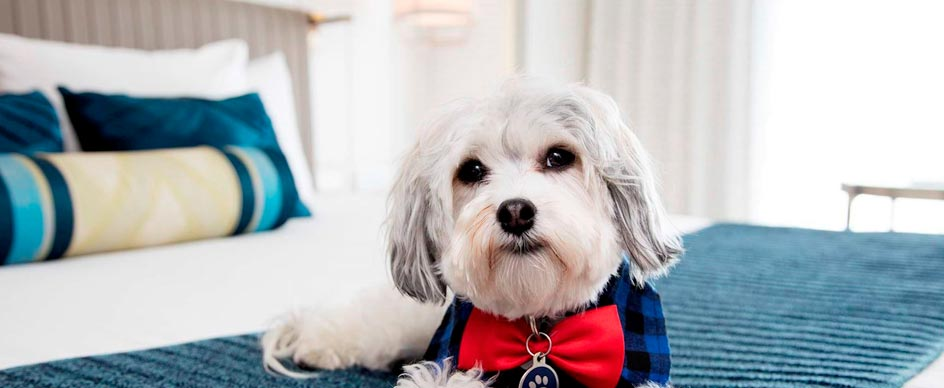 Does the Hotel Nikko allow pets in the room?